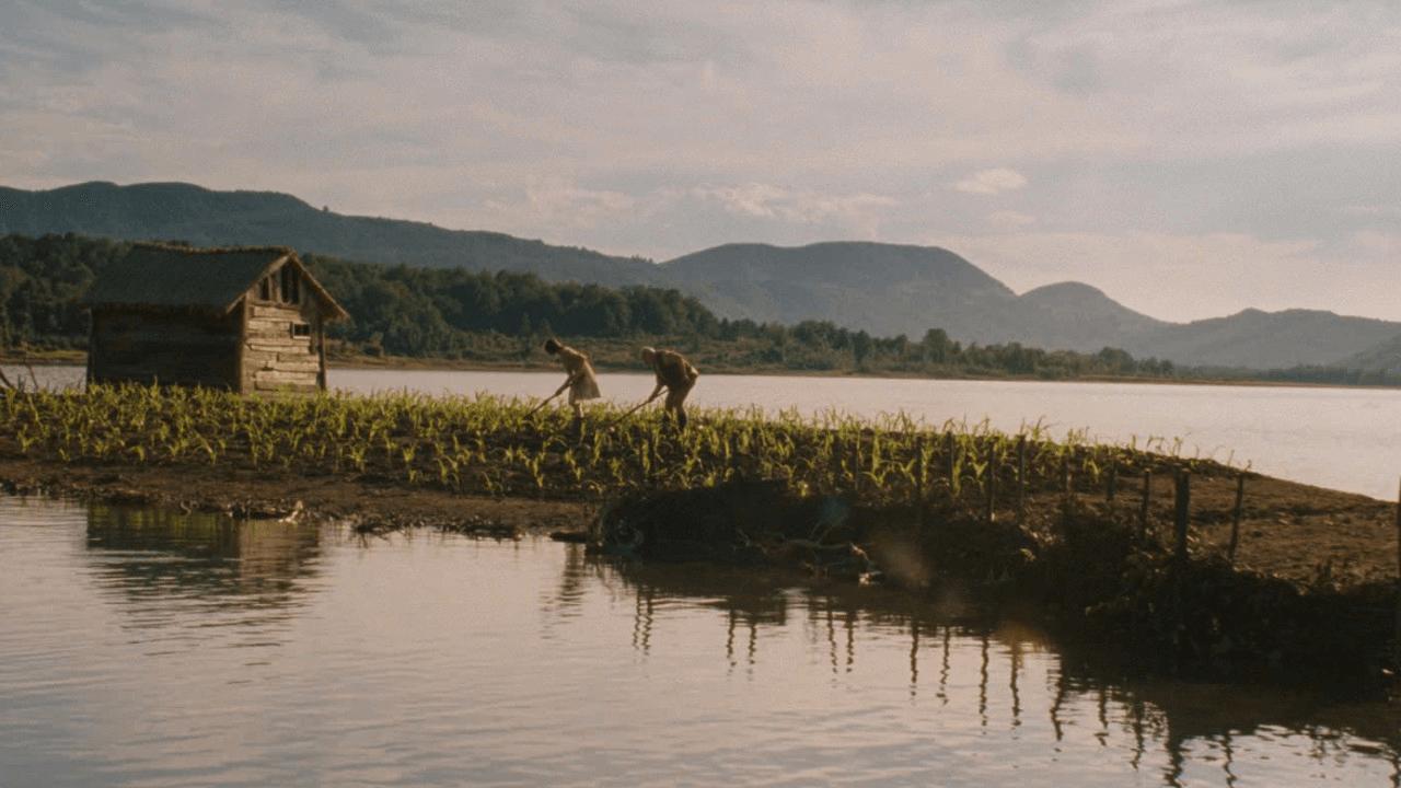 película corn island opiniones
