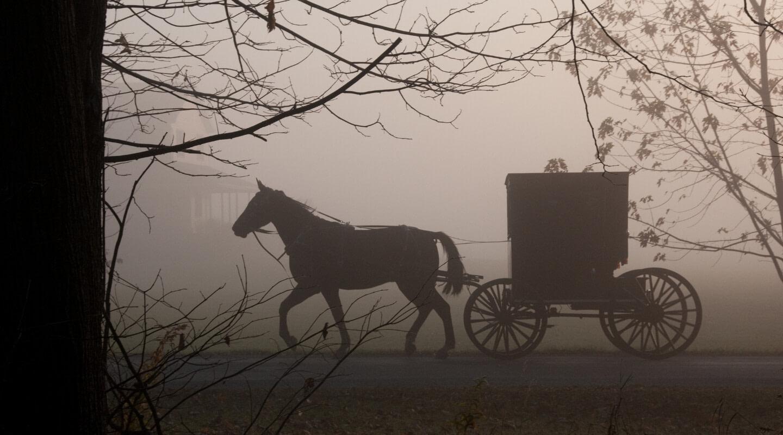 la última niebla libro